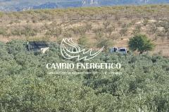 EXPLOTACIÓN DE OLIVOS (JAÉN)
